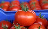 Rusya'ya domates ihracatında çözüm yakın