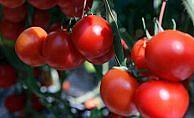Gıdada 2017'nin zam şampiyonu 'domates'