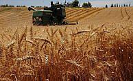 'Türkiye buğdayda kendine yetiyor'