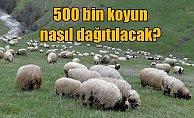 300 koyun almanın şartları: Öncelik köyde yaşayanlara