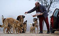 Emeklilik mesaisine sokak hayvanlarıyla başlıyor