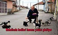 Mahallenin kedileri imamın yolunu gözlüyor