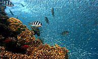 12 yeni deniz canlısı keşfedildi