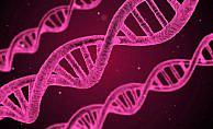 Hücrelerde DNA'nın yeni bir yapısı keşfedildi