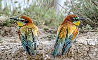 Türkiye'de görüntülenen kuş türü sayısında sevindirici haber