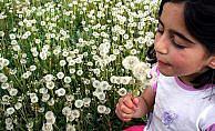 Her 10 çocuktan birinde 'polen alerjisi' görülüyor
