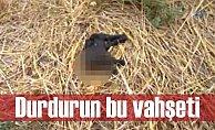 Adana'da vahşet; Kedinin başını keserek öldürdüler