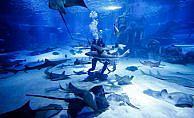 Dalgıçların köpek balıkları arasında 'akvaryum mesaisi'