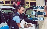 Sarhoş kirpilere polis müdahalesi