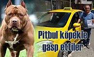 Pitbul köpekle taksiciyi mezarlıkta gasp ettiler