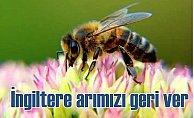 İngiltere Türk arısını öldürmek için seferber oldu