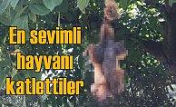 Dünyanın en sevimli hayvanı   Sincapları öldürüp ağaca astılar