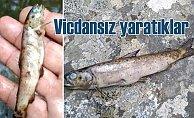 Kaz Dağları'nda elektrikli balık katliamı