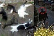 Alanya'da kedi katliamı: Rus vatandaşı gözaltında